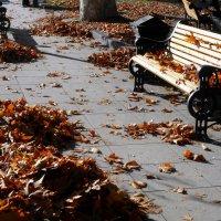 Проказница осень :: Наталья (D.Nat@lia) Джикидзе (Берёзина)