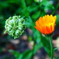 Из жизни растений - эволюция ... :: Damir Si