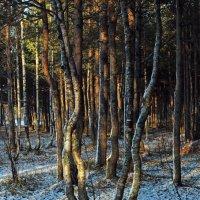 Северодвинск. В лесу :: Владимир Шибинский