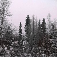 Зимний лес.. :: Оксана Н