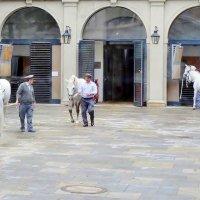 Лошадки в Вене :: Аркадий