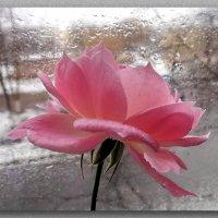 А за окном то дождь,то снег :: Liliya Kharlamova