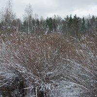 Ходила в парк искать зиму :: Елена Павлова (Смолова)