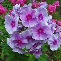 Ласковый цветок :: Светлана Лысенко