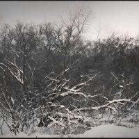 Под снежными одеждами. :: Ольга Некрасова