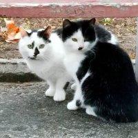 Черно-белые,бело-черные...! :: Наталья