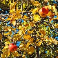 Осень в монастырском саду. :: Геннадий Александрович