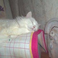 Спящая кошка :: Владимир Ростовский