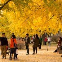 осень в Сеуле :: Olga Ionina G