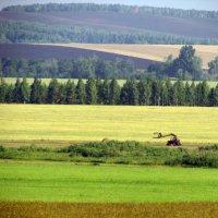 Оренбургские поля :: Константин Филякин
