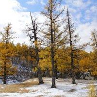 золото и голубое небо :: василиса косовская