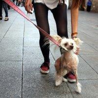 Собака и человек :: vasya-starik Старик