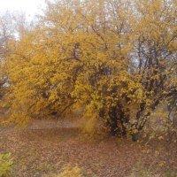 осень :: Владимир Суязов