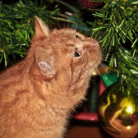 Новым годом запахло :: Elena Ignatova