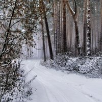 С утра метельный снеговей... :: Лесо-Вед (Баранов)