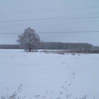 Путь до объекта съёмки :: Алексей Масалов
