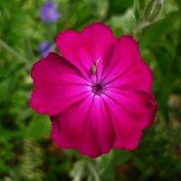 Яркий цветочек :: Светлана Лысенко