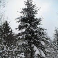 Зимушка-зима :: BoxerMak Mak