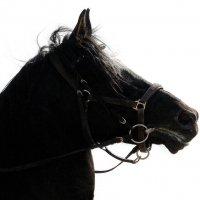 Прибой...  норовистый  конь..  призер... :: Валерия  Полещикова