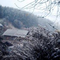 Снег :: Ольга Овчинникова
