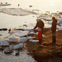 Люди и птицы :: Teresa Valaine