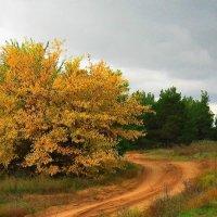 Осенняя дорога :: Natali