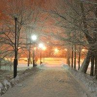 Зимний ночной парк. :: Виктор Евстратов
