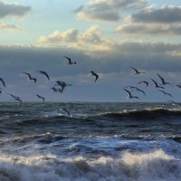 Лишь только чайки над волнами :: Виолетта