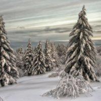 Берендеев лес :: Владимир Чуприков