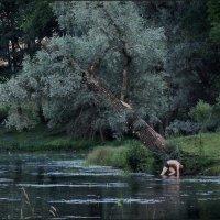 склонение...) :: sv.kaschuk