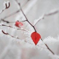 Красное на белом :: Аl Anis
