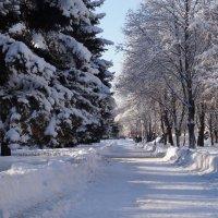 зима потихоньку входит в свои права :: Ирина ***