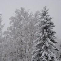 Зима ! :: laana laadas