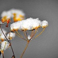 Под знаком зимы! :: A. SMIRNOV