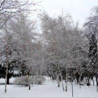 В зимнем парке...3 :: Тамара (st.tamara)