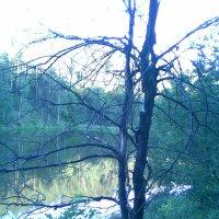 Сухое дерево у пруда :: Владимир Ростовский