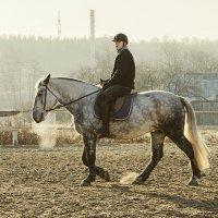 Учебная рысь... :: Ирина Шарапова