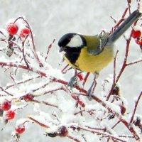 - Зиму дождались , хоть снежку поесть !!!!!!!! :: Hаталья Беклова