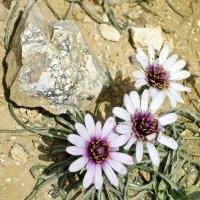 Цветок и камень. :: Алексей Окунеев