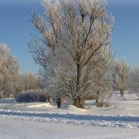 Русская зима :: Павлова Татьяна Павлова