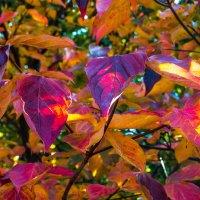 Радуга листьев :: Galina Kazakova