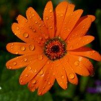 Цветы из лета :: snd63 Сергей