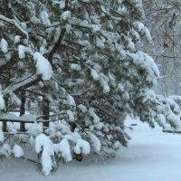 А снег идет... :: Natali