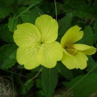 Жёлтый цветок :: Анатолий
