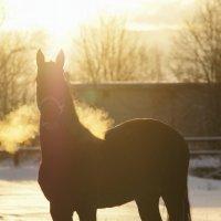 Зима пришла! :: Валерия заноска