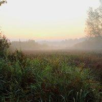 Осенним утром случайно... :: Юрий Морозов