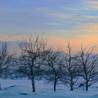Зимние яблони :: Михаил Лобов (drakonmick)