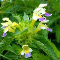 Полевые цветы 4 :: оксана