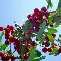 Веточка витаминов :: Стас Борискин