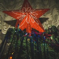 Главная звезда. :: Света Кондрашова